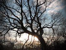 Old beautiful tree Stock Photos