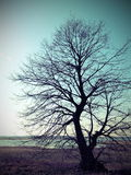 Old beautiful tree Stock Images