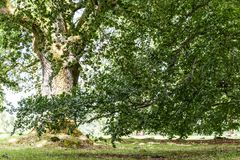 Old beautiful woods. In sweden countryside Royalty Free Stock Photos