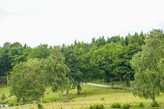 Old beautiful woods. In sweden countryside Royalty Free Stock Image