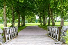 Old beautiful woods. In sweden countryside Stock Photography