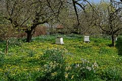 Old Bee Hives in an Orchard Royalty Free Stock Image
