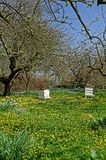 Old Bee Hives in an Orchard Stock Photography