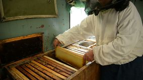 The old beekeeper is holding a frame with honeycomb and honey in the room where frames with wax and honey are stored. Beekeeper shows a frame to the camera stock footage