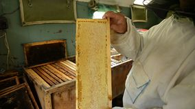 The old beekeeper is holding a frame with honeycomb and honey in the room where frames with wax and honey are stored. Beekeeper shows a frame to the camera stock video