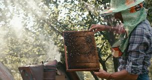 The old beekeeper is holding the honecomb on the wooden frame with bees in front of bee smoker. RED camera shot. 4k