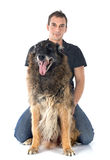 Old belgian shepherd and man Stock Images