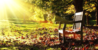 Old bench with autumn leaves and morning sunlight Stock Photo