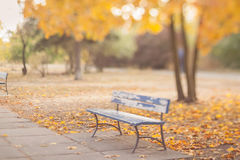 Old bench in the autumn park. Stock Image