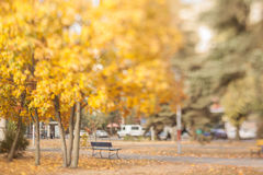 Old bench in the autumn park. Royalty Free Stock Photography