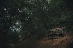 Old bench is in a dark forest Royalty Free Stock Images