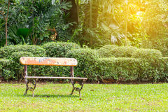 Old bench in the garden field with tree Royalty Free Stock Photo