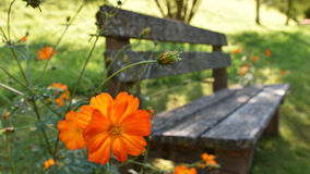 Old bench with orange flower. Old bench with bright orange flower in front Stock Photography
