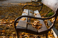Old bench in a park Royalty Free Stock Photos
