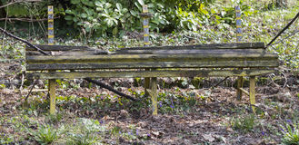 Old bench in the park Royalty Free Stock Image