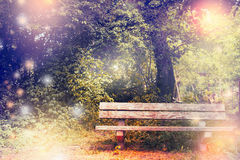 Old bench in the park or garden. Royalty Free Stock Image