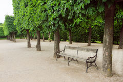 Old bench in the park with green trees Stock Images
