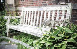Old bench in summer park Royalty Free Stock Photography