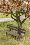 An old bench under a tree Stock Photos