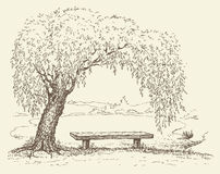 Old bench under a willow tree by the lake stock illustration