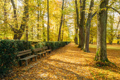 Old Benches In Beautiful Autumn City Park. Sunny Day Royalty Free Stock Photography