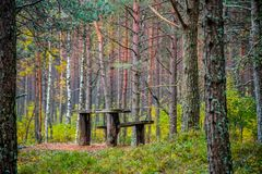 Old benches in the woods. Autumn nature forest Royalty Free Stock Photography