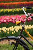 Old bicycle with blurred tulips in background royalty free stock images