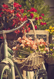 Old bicycle with a bucket of colorful flowers Royalty Free Stock Image