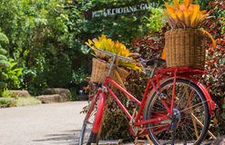 Old bicycle. Equipped with baskets of leaves Royalty Free Stock Photos