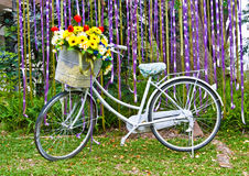 Old bicycle with flower basket. Decorative old white painted  bicycle with basket of colorful flower Royalty Free Stock Photography