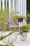 Old bicycle and flower in basket Stock Image