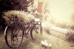 Old bicycle with flower in garden Stock Images