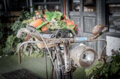 Old bicycle and flowers Stock Images