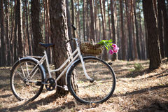 Old bicycle with flowers in basket, the woods Stock Images