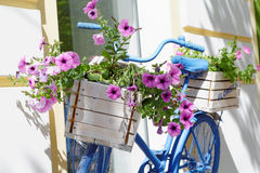 Old bicycle with flowers box Stock Photography