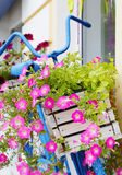 Old bicycle with flowers box Stock Photos