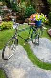Old bicycle and flowers Royalty Free Stock Images