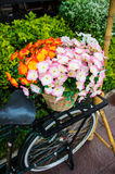 Old bicycle and flowers Royalty Free Stock Photo