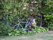 Old bicycle with flowers near fence, Lithuania stock images