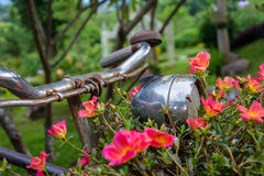 Old bicycle with flowers. Royalty Free Stock Photos