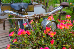 Old bicycle with flowers. Stock Photos