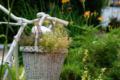 Old bicycle ideas for gardening Royalty Free Stock Images