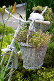 Old bicycle ideas for gardening Royalty Free Stock Photo