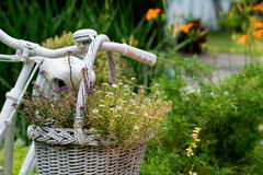 Old bicycle ideas for gardening Royalty Free Stock Photos