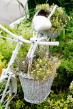 Old bicycle ideas for gardening Royalty Free Stock Image