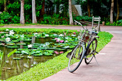 Old bicycle beside lotus pond Stock Photography