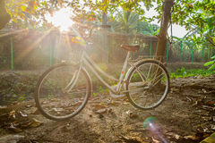 The old bicycle. Royalty Free Stock Photos