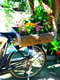 Old bicycle. In my garden Royalty Free Stock Photo