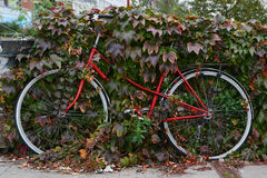 Old bicycle Royalty Free Stock Photography