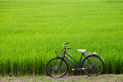 Old bicycle with paddy field background Stock Photos